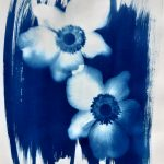 Cyanotype made by LennArt Schou